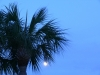 palm tree and moon