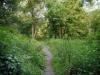 Uncharted pathway
