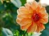 Stunning flora