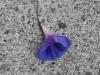Lonley Flower.jpg