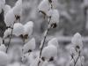North Carolina snowfall