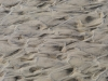 Beach Sand Wildwood